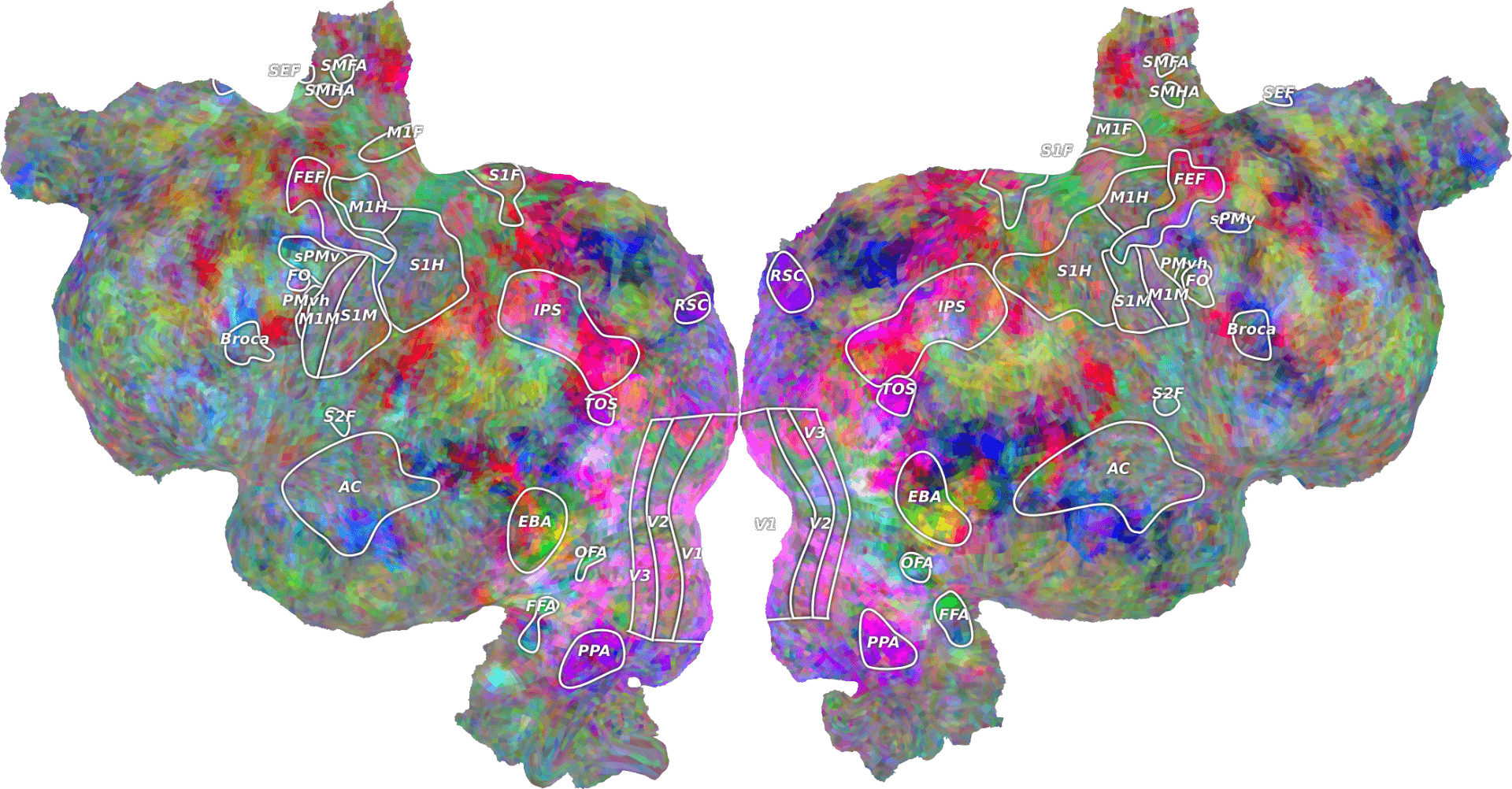 A flattened representation of the human brain imaged at the BIC. Colors correspond to the brain's activation in response to certain words or images. Image courtesy of Alex Huth, Gallant Lab.