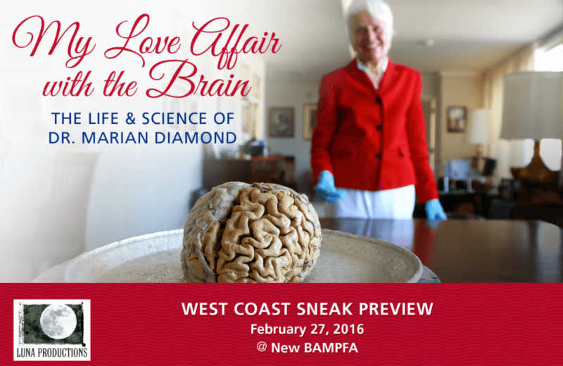 My Love Affair With The Brain The Life And Science Of Dr Marian
